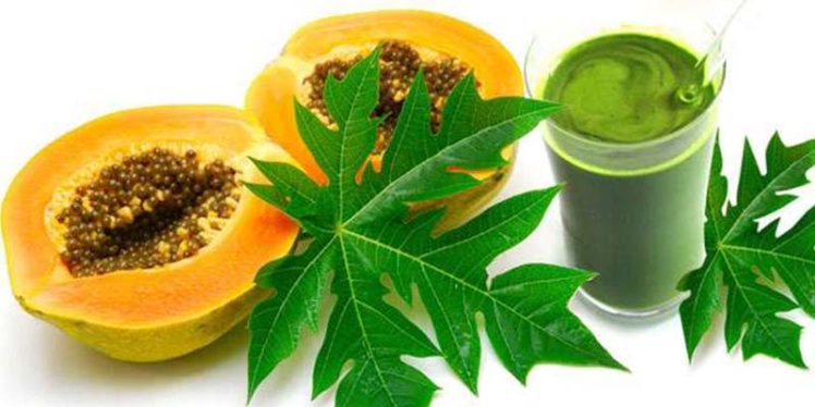 Incredible Benefits of Papaya Leaf Juice