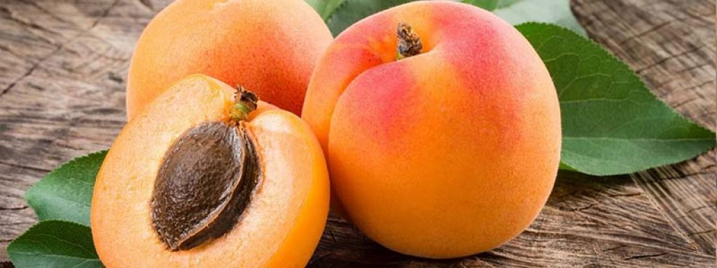 Apricots - The High Protein Fruits